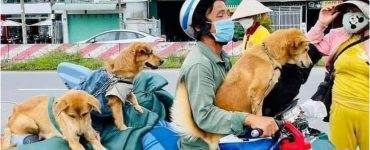 VIETNAM DOGS KILLED