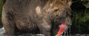 Alaska's fattest beer