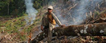 Amazon rainforest facebook
